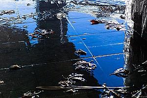 Feuilles dénaturées par le gel.